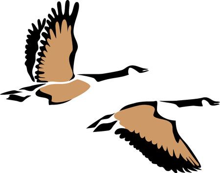 Ilustración de Canada goose - Imagen libre de derechos