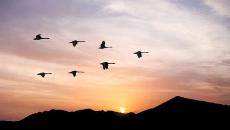 Photo pour Flying birds across the hill panoramic view - image libre de droit