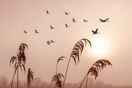 Photo for Beautiful sky on sunset or sunrise with flying birds natural background - Royalty Free Image