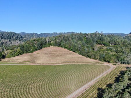 Aerial view of vineyard in Napa Valley during summer season. Napa County, in California's Wine Country. Vineyards landscape