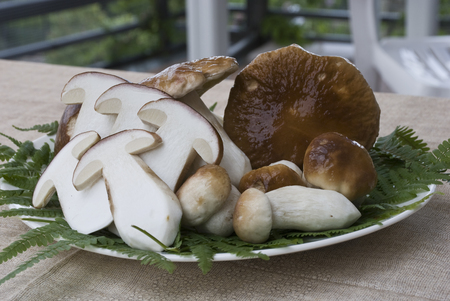 porcini mushrooms presented on the plate, some sliced, some whole