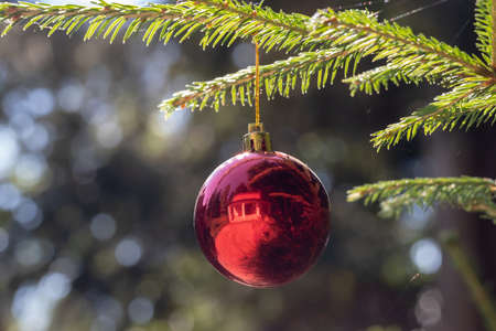 Photo pour Red Christmas ball hanging on Christmas tree. Xmas theme with space for text - image libre de droit