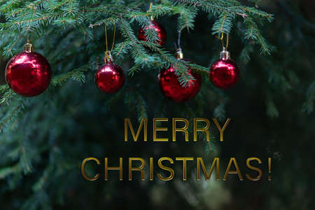 Photo pour Merry Christmas greetings. Red glass balls on green pine branches. Christmas card - image libre de droit