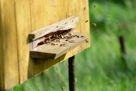 Foto de Hive with bees. Bees at beehive - Imagen libre de derechos