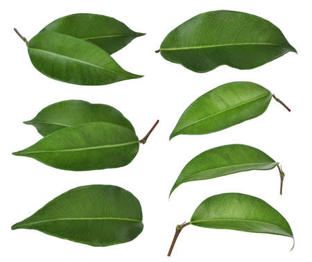 Photo pour set of green leaf isolated on white background - image libre de droit
