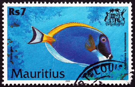 MAURITIUS - CIRCA 2000: a stamp printed in Mauritius shows Powder blue tang, acanthurus leucosternon, is a species of marine tropical fish, circa 2000