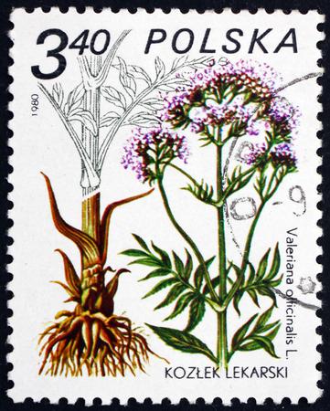 POLAND - CIRCA 1980: a stamp printed in Poland shows Valerian, Valeriana Officinalis, Medicinal Plant, circa 1980