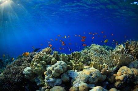 beautiful coral reef and much sea fish