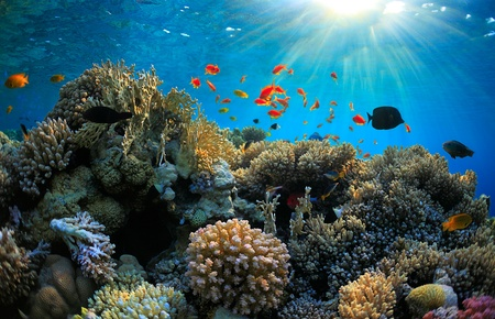 beautiful coral reef and many fish