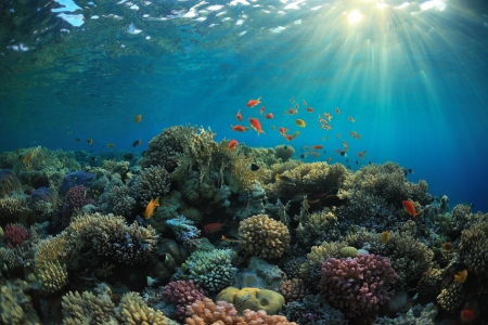 beautiful coral reef and mach fish