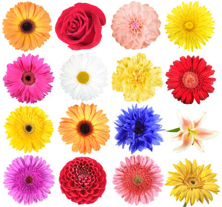Set of flowers. Isolated on white background. Close-up.