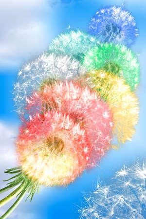 Photo pour Group of color fluffy dandelion flowers on blue sky background as rainbow clouds. Close-up. Studio photography. - image libre de droit