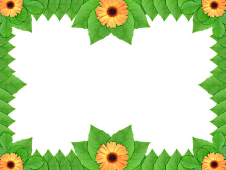 Floral frame with orange flowers and green leaf on white background. Nature art ornament template for your design. Close-up. Studio photography.