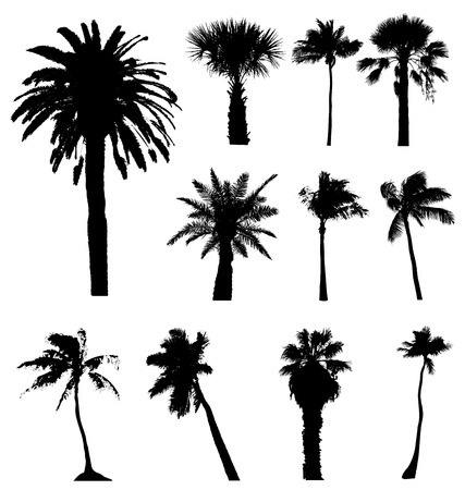 Collection of vector palm trees silhouettes. Easy to edit, any size.