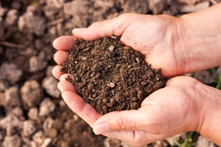 Female hands full of soil over soil background.Representing fertility