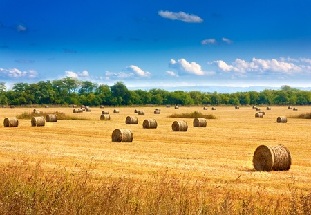 Beautiful countryside landscape. Round straw bales in harvested fields and blue sky with clouds