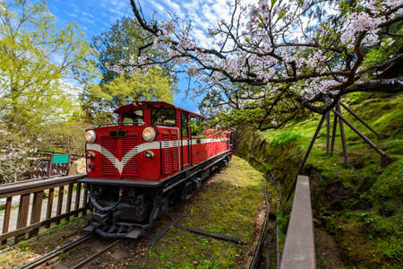 Photo for Alishan forest train in Alishan National Scenic Area during spring season. (focus flower) - Royalty Free Image