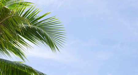 Coconut palm trees, beautiful tropical with sky and clouds.