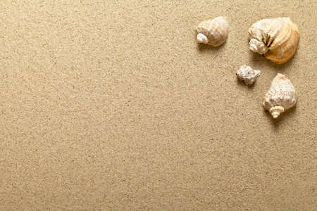 Foto de Sea shells on sandy beach. Summer background. Top view - Imagen libre de derechos