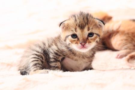 portrait of little cute kitten, close up