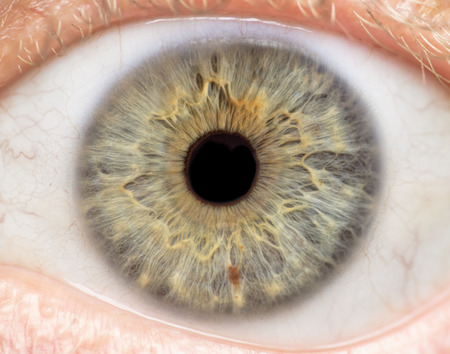 Photo for Macro photo of human eye, iris, pupil, eye lashes, eye lids. - Royalty Free Image