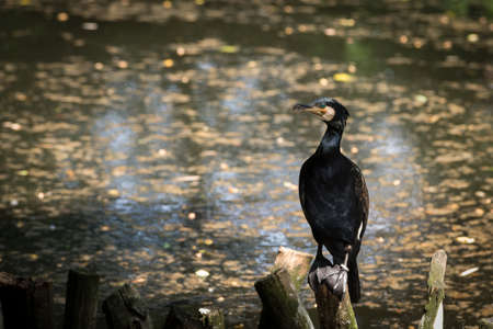 Cormorants on branches in water