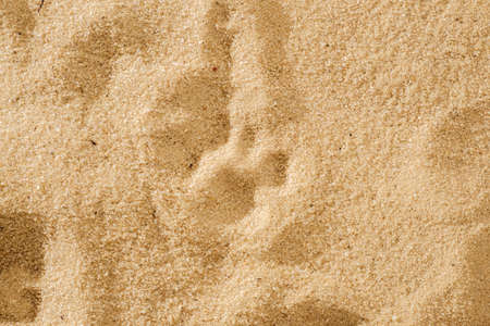 A cat's footprint in the soft sand, animal natureの素材 [FY31099361849]