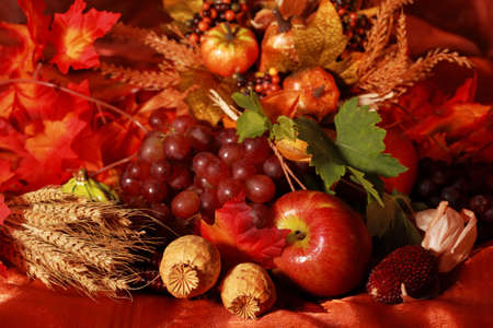 Still life and harvest or table decoration for Thanksgivingの写真素材