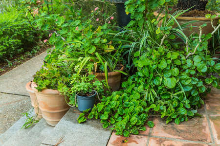 Photo for Variation of plants and flower pots in Mediterranean garden on the stairs - Royalty Free Image