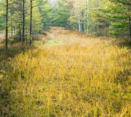 Autumn landscape on a bog