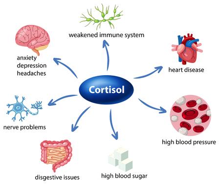 Illustration pour The role of cortisol in the body diagram illustration - image libre de droit