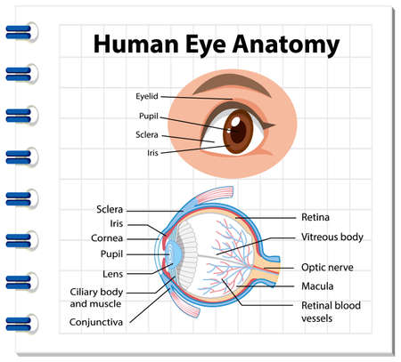 Illustration pour Diagram of human eye anatomy with label illustration - image libre de droit