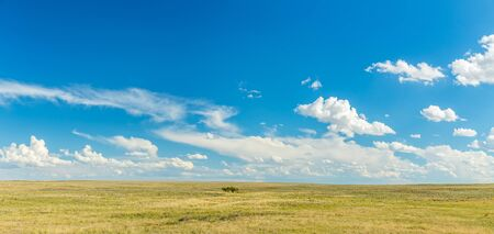 Prairies are ecosystems considered part of the temperate grasslands, savannas, and shrublands biome by ecologists, based on similar temperate climates, moderate rainfall, and a composition of grasses, herbs, and shrubs, rather than trees, as the dominant