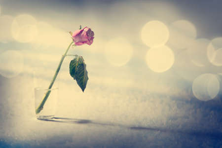 Dying Rose on the Snow Background. Solitude Concept. Toned Photo with Bokeh and Copy Space.