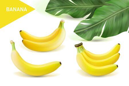 Illustration pour Vector realistic banana set. Design of natural, organic dairy products. Eps 10 - image libre de droit