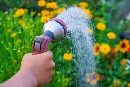 Foto de Close up view on a hand with a sprinkler, watering the yellow flowers in the green garden - Imagen libre de derechos