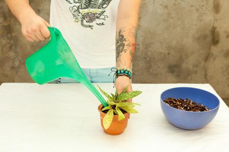 Florist  transplanting plant a into a new pot