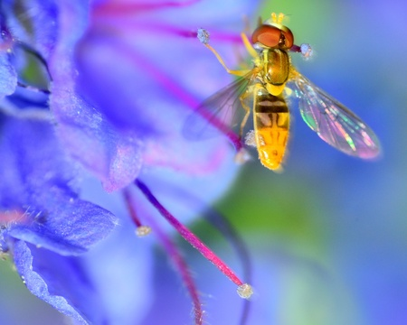 Hoverfly perched on a flower