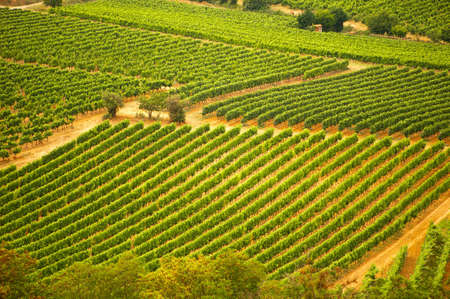 Aerial view of a vineyard in the South of France
