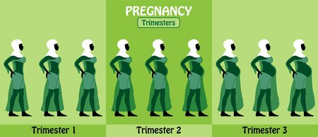 Illustration for Pregnancy trimesters All types of objects - Royalty Free Image