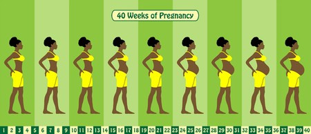 Illustration for 40 Weeks of pregnancy stages. All types of objects - Royalty Free Image