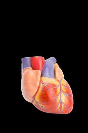 Photo pour Plastic model of human heart isolated on black background - image libre de droit