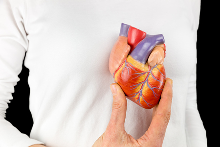 Photo pour Female hand holds human heart model in front of white chest with black background - image libre de droit