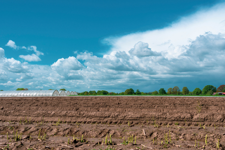 Landscape with asparagus field in the foreground at blue cloud sky. Location: Germany, North Rhine-Westphalia, Heiden