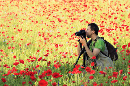 Photographer with camera on tripod surrounded by poppy field