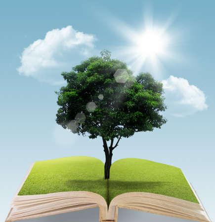 Photo pour Book with tree on natural background  education concept - image libre de droit
