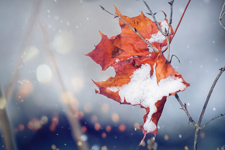 The Winter replaces the Fall, represented symbolically with a slightly snow covered maple leaf.