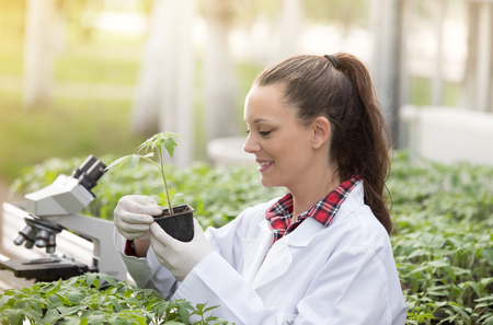 Pretty young woman agronomist holding seedling in flower pot in greenhouse with microscope in background. Plant protection and productivity improvement concept