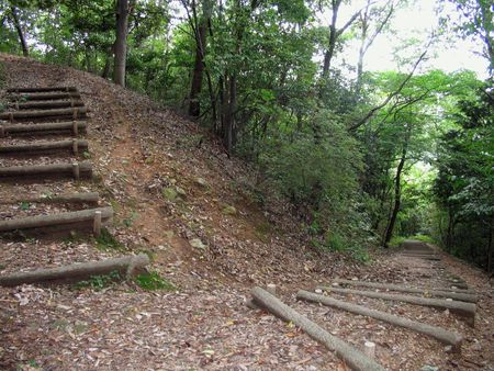 a bend in a hillside nature trail with one path leading up and one path leading down.の写真素材