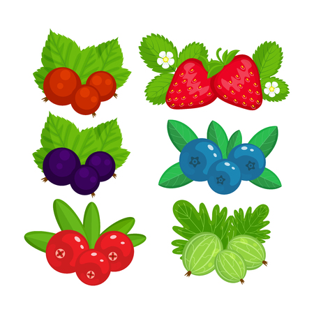 Illustration pour Set of garden berries illustration isolated on white background. Strawberry, cranberry, gooseberry, black currant, red currant. - image libre de droit
